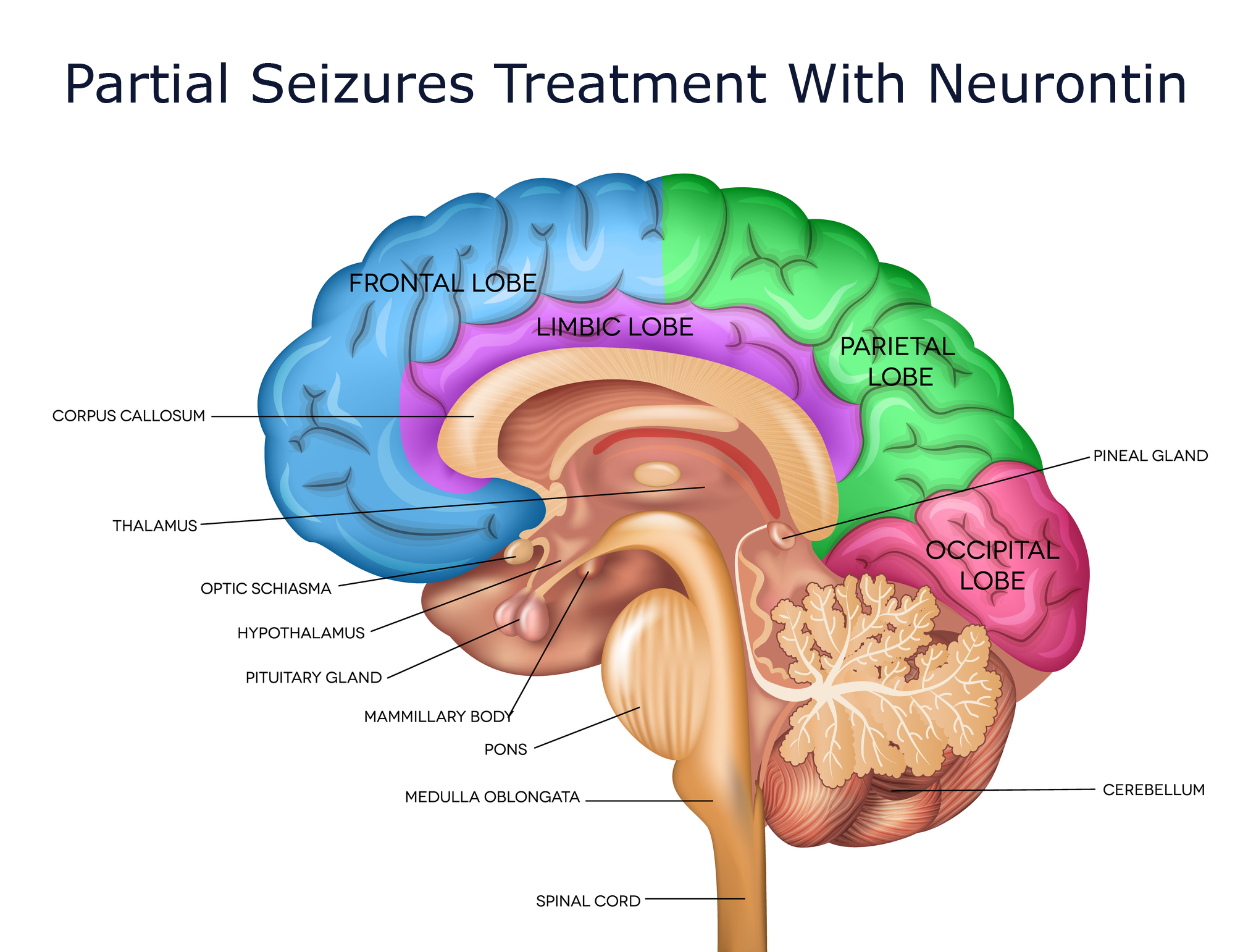Partial Seizures Treatment With Neurontin